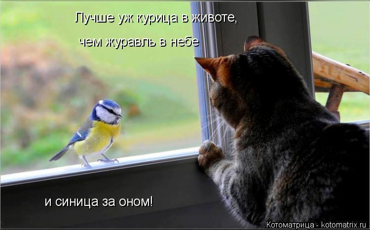 Котоматрица: Лучше уж курица в животе, чем журавль в небе и синица за оном!