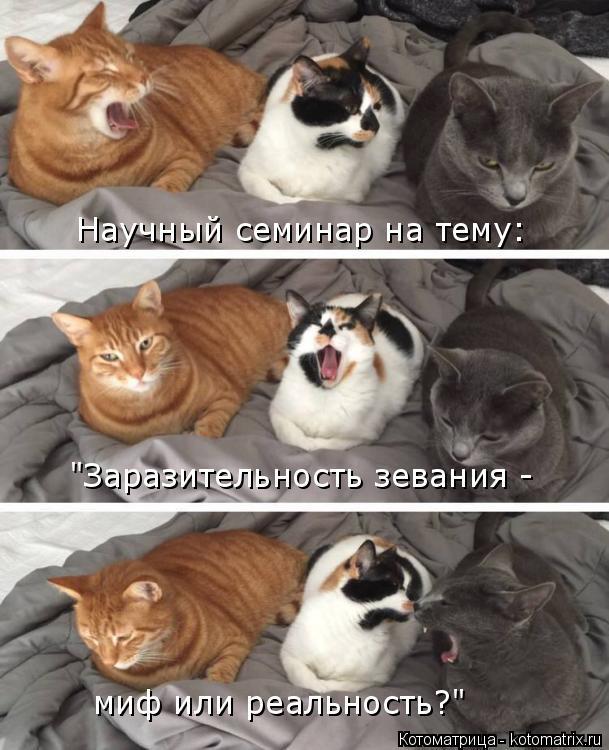 """Котоматрица: Научный семинар на тему: """"Заразительность зевания - миф или реальность?"""""""