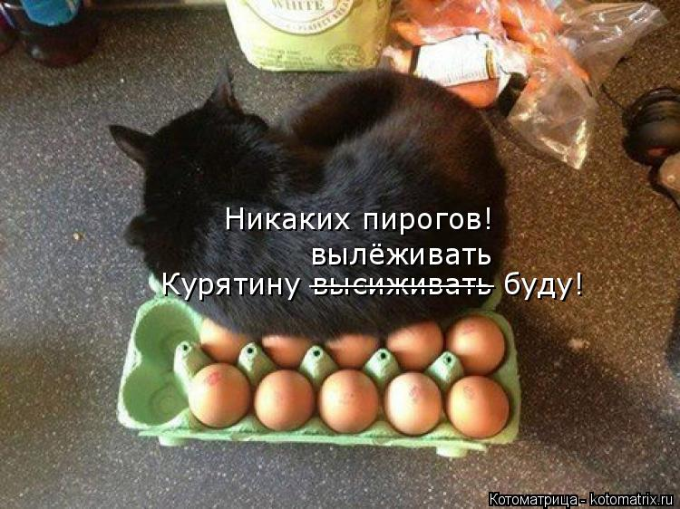Котоматрица: Никаких пирогов! Курятину высиживать буду! вылёживать __________