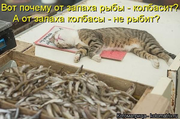 Котоматрица: Вот почему от запаха рыбы - колбасит? А от запаха колбасы - не рыбит?