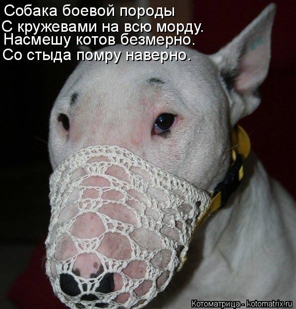 Котоматрица: Собака боевой породы Насмешу котов безмерно. Со стыда помру наверно. С кружевами на всю морду.