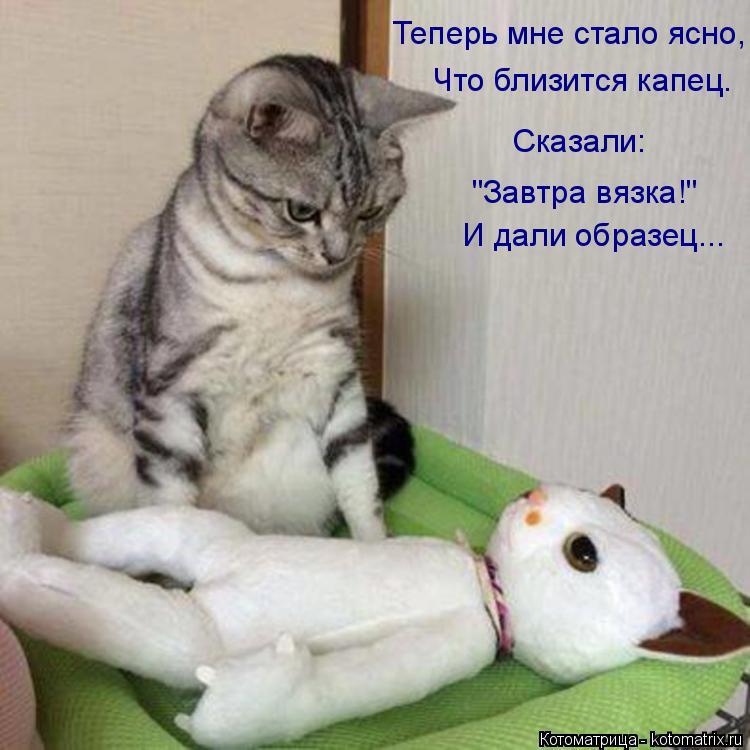 """Котоматрица: Теперь мне стало ясно,  Что близится капец. Сказали: """"Завтра вязка!"""" И дали образец..."""