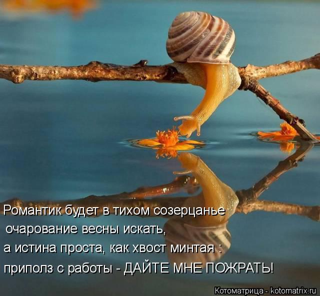 Котоматрица: Романтик будет в тихом созерцанье очарование весны искать, а истина проста, как хвост минтая : приполз с работы - ДАЙТЕ МНЕ ПОЖРАТЬ!