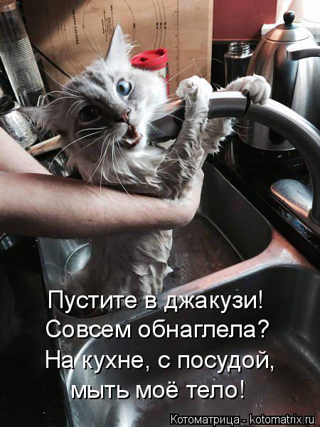 Котоматрица: Пустите в джакузи!  Совсем обнаглела? На кухне, с посудой, мыть моё тело!