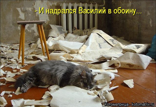 Котоматрица: - И надрался Василий в обоину...