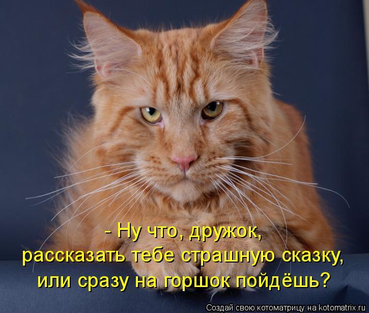 Котоматрица: - Ну что, дружок, рассказать тебе страшную сказку, или сразу на горшок пойдёшь?