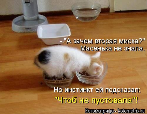 """Котоматрица: - """"А зачем вторая миска?"""" Масенька не знала. Но инстинкт ей подсказал: """"Чтоб не пустовала""""!"""