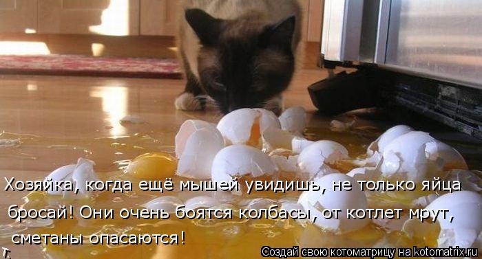 Котоматрица: Хозяйка, когда ещё мышей увидишь, не только яйца  бросай! Они очень боятся колбасы, от котлет мрут,  сметаны опасаются!