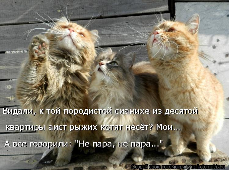 """Котоматрица: Видали, к той породистой сиамихе из десятой квартиры аист рыжих котят несёт? Мои... А все говорили: """"Не пара, не пара..."""""""