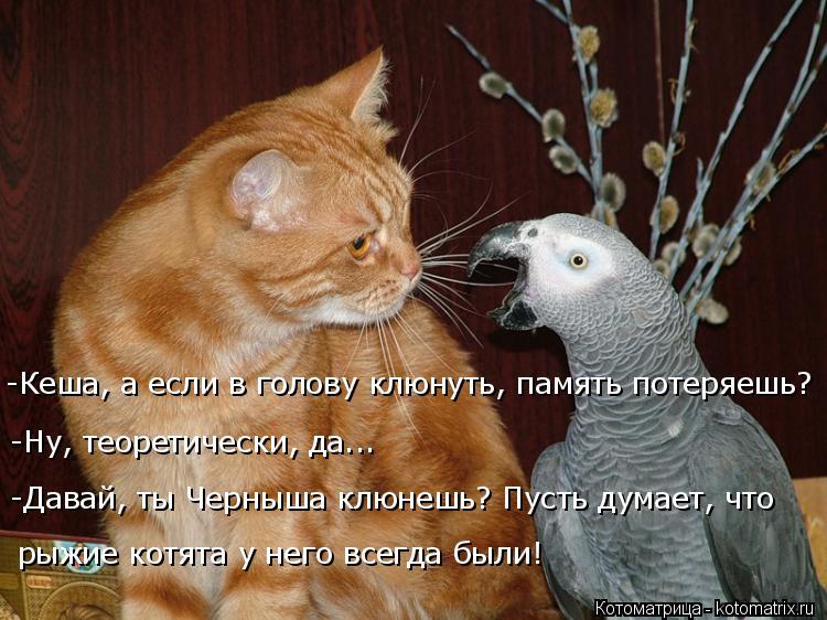 Котоматрица: -Ну, теоретически, да... рыжие котята у него всегда были! -Давай, ты Черныша клюнешь? Пусть думает, что  -Кеша, а если в голову клюнуть, память по