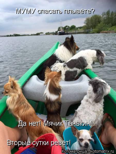 Котоматрица: МУМУ спасать плывёте? Да нет! Мячик Танькин!  Вторые сутки ревёт!