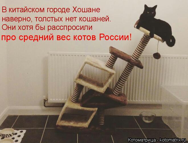 Котоматрица: В китайском городе Хошане наверно, толстых нет кошаней. Они хотя бы расспросили про средний вес котов России!