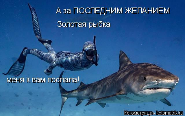 Котоматрица: А за ПОСЛЕДНИМ ЖЕЛАНИЕМ Золотая рыбка меня к вам послала!
