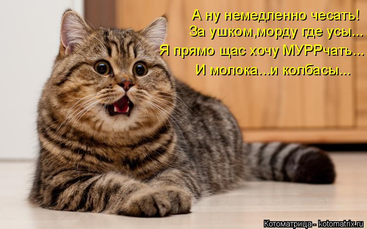 Котоматрица: За ушком,морду где усы... Я прямо щас хочу МУРРчать... И молока...и колбасы... А ну немедленно чесать!
