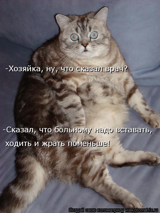 Котоматрица: -Хозяйка, ну, что сказал врач? -Сказал, что больному надо вставать,  ходить и жрать поменьше!