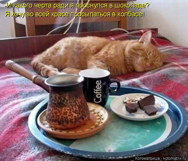Котоматрица: -И какого черта ради я проснулся в шоколаде? Я хочу во всей красе просыпаться в колбасе!