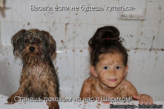 Котоматрица: Васька.если не будешь купаться- Станешь похожим на нас с Шариком!
