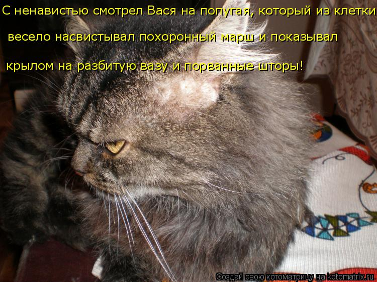 Котоматрица: С ненавистью смотрел Вася на попугая, который из клетки  весело насвистывал похоронный марш и показывал  крылом на разбитую вазу и порванны