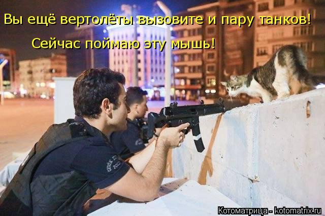 Котоматрица: Вы ещё вертолёты вызовите и пару танков!  Сейчас поймаю эту мышь!