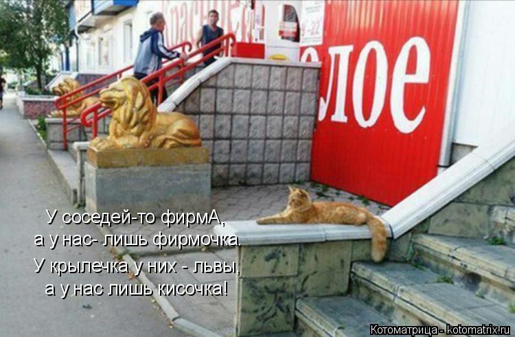 Котоматрица: У соседей-то фирмА, а у нас- лишь фирмочка. У крылечка у них - львы, а у нас лишь кисочка!