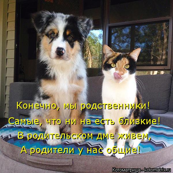 Котоматрица: Конечно, мы родственники! Самые, что ни на есть близкие! В родительском дме живем, А родители у нас общие!