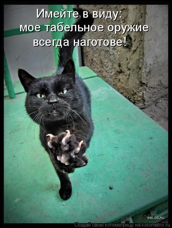 Котоматрица: Имейте в виду:  мое табельное оружие  всегда наготове!