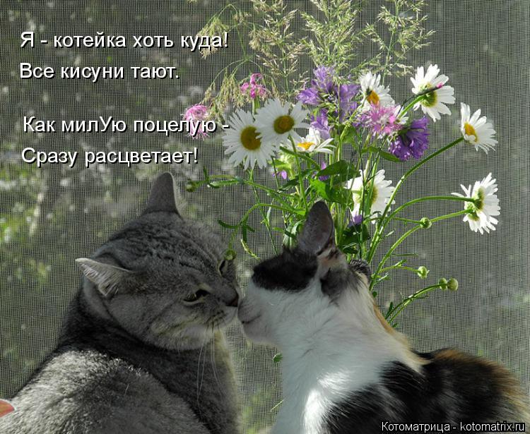 Котоматрица: Сразу расцветает! Все кисуни тают. Я - котейка хоть куда! Как милУю поцелую -