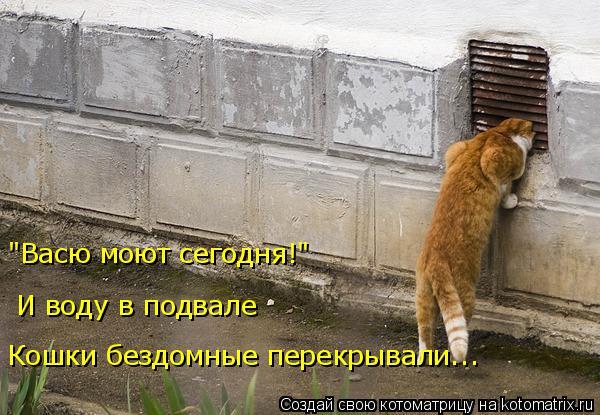 """Котоматрица: """"Васю моют сегодня!""""  И воду в подвале Кошки бездомные перекрывали..."""