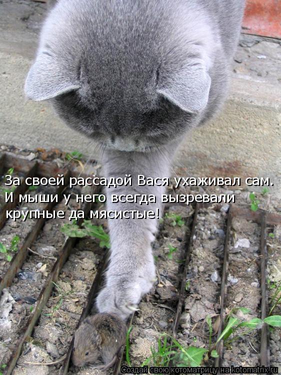 Котоматрица: За своей рассадой Вася ухаживал сам. И мыши у него всегда вызревали  крупные да мясистые!