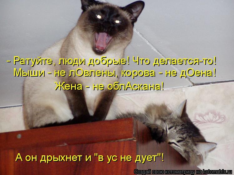 """Котоматрица: - Ратуйте, люди добрые! Что делается-то! Мыши - не лОвлены, корова - не дОена! Жена - не облАскана! А он дрыхнет и """"в ус не дует""""!"""