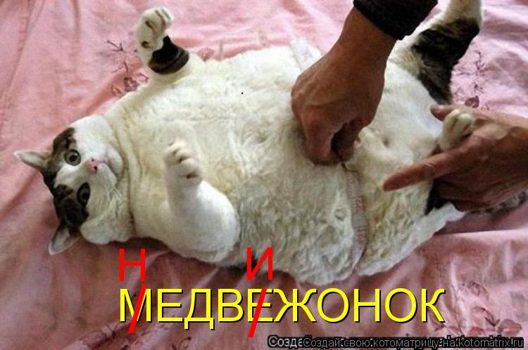 Котоматрица: МЕДВЕЖОНОК / / Н И