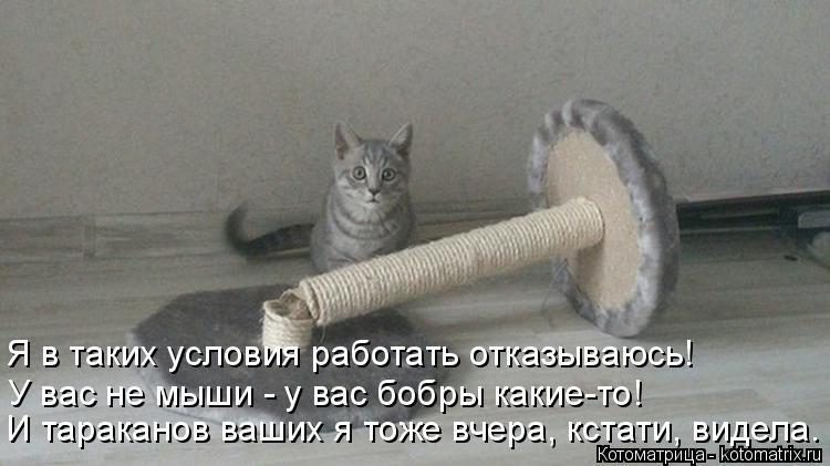 Котоматрица: Я в таких условия работать отказываюсь! У вас не мыши - у вас бобры какие-то! И тараканов ваших я тоже вчера, кстати, видела.