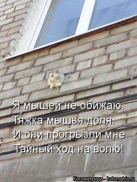 Котоматрица: Я мышей не обижаю. Тяжка мышья доля. И они прогрызли мне Тайный ход на волю!