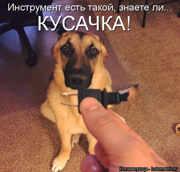 Илья Болобан: Пока нет закона, собак