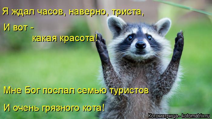 Котоматрица: Я ждал часов, наверно, триста,  И вот - какая красота! Мне Бог послал семью туристов И очень грязного кота!