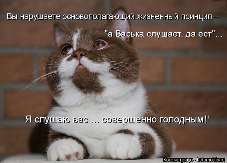 """Котоматрица: Вы нарушаете основополагающий жизненный принцип - """"а Васька слушает, да ест""""... Я слушаю вас ... совершенно голодным!!"""