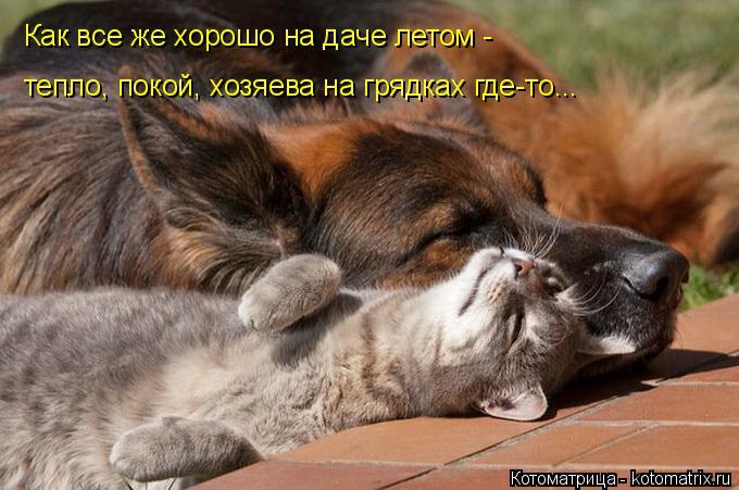 Котоматрица: Как все же хорошо на даче летом - тепло, покой, хозяева на грядках где-то...