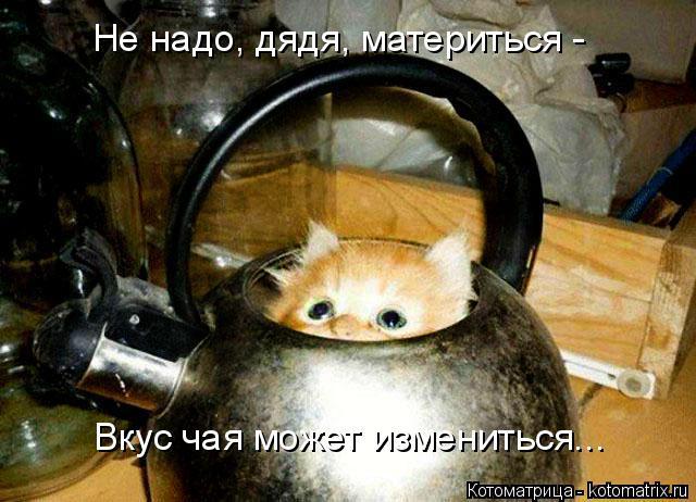 Котоматрица: Не надо, дядя, материться -  Вкус чая может измениться...