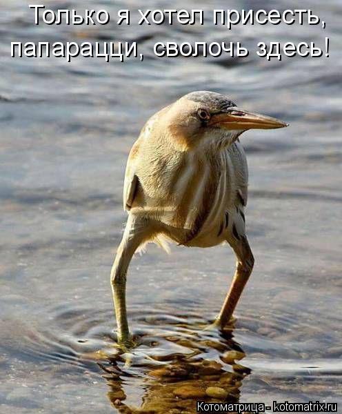 http://kotomatrix.ru/images/lolz/2016/07/28/kotomatritsa_Iw.jpg
