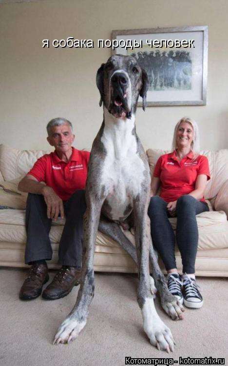 Аквариумы самая большая собака в россии процессе
