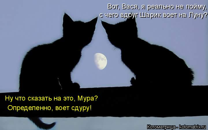 Котоматрица: Вот, Вася, я реально не пойму, с чего вдруг Шарик воет на Луну? Ну что сказать на это, Мура? Определенно, воет сдуру!