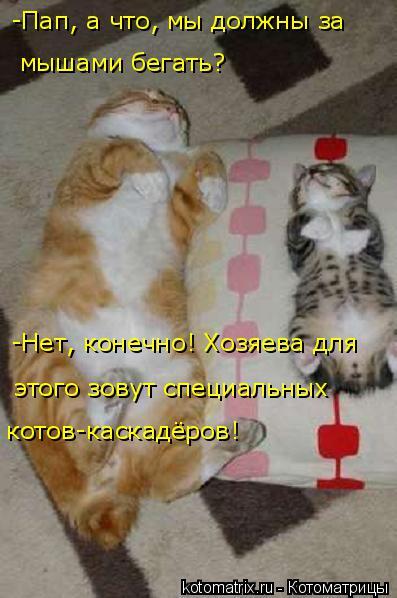 Котоматрица: -Нет, конечно! Хозяева для  котов-каскадёров! этого зовут специальных  -Пап, а что, мы должны за  мышами бегать?