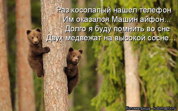 Котоматрица: Раз косолапый нашел телефон Им оказался Машин айфон... Долго я буду помнить во сне Двух медвежат на высокой сосне...