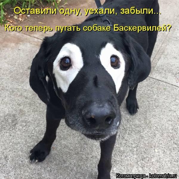 Котоматрица: Оставили одну, уехали, забыли... Кого теперь пугать собаке Баскервилей?