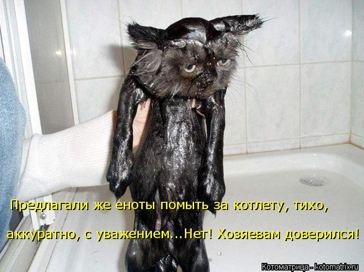 Котоматрица: Предлагали же еноты помыть за котлету, тихо,  аккуратно, с уважением...Нет! Хозяевам доверился!