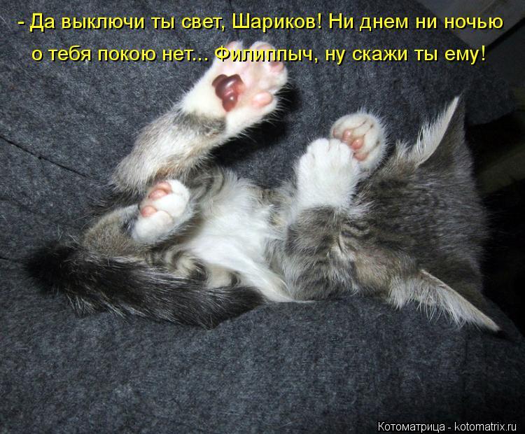Котоматрица: - Да выключи ты свет, Шариков! Ни днем ни ночью о тебя покою нет... Филиппыч, ну скажи ты ему!