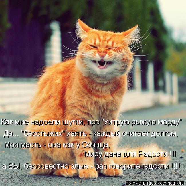 """Котоматрица: Как мне надоели шутки, про """"хитрую рыжую морду"""" Моя масть - она как у Солнца,  Миру дана для Радости !!! а ВЫ, бессовестно злые - раз говорите гад"""