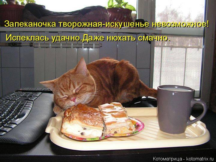 Котоматрица: Запеканочка творожная-искушенье невозможное! Испеклась удачно.Даже нюхать смачно.