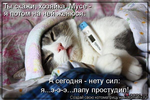 Котоматрица: Ты скажи, хозяйка, Мусе - я потом на ней женюся. А сегодня - нету сил: я...э-э-э...лапу простудил!