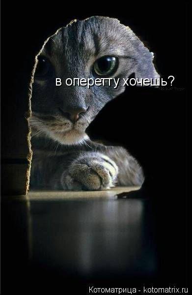 Котоматрица: в оперетту хочешь?